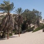 01-Huacachina-Oasis-Palmiers